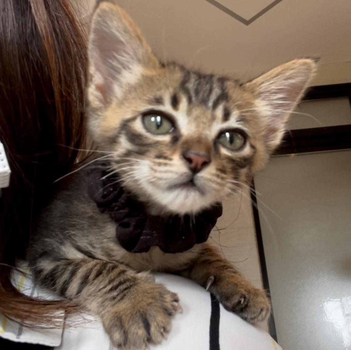 小さな天使クラブ チビ天 ちび天 保護活動 保護猫 子猫 殺処分をなくしたい 動物愛護 猫がいる生活